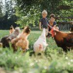 Biofutter für g'sunde HÜhner